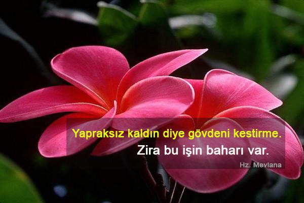 Mevlana Celaleddini Rumi Sözleri