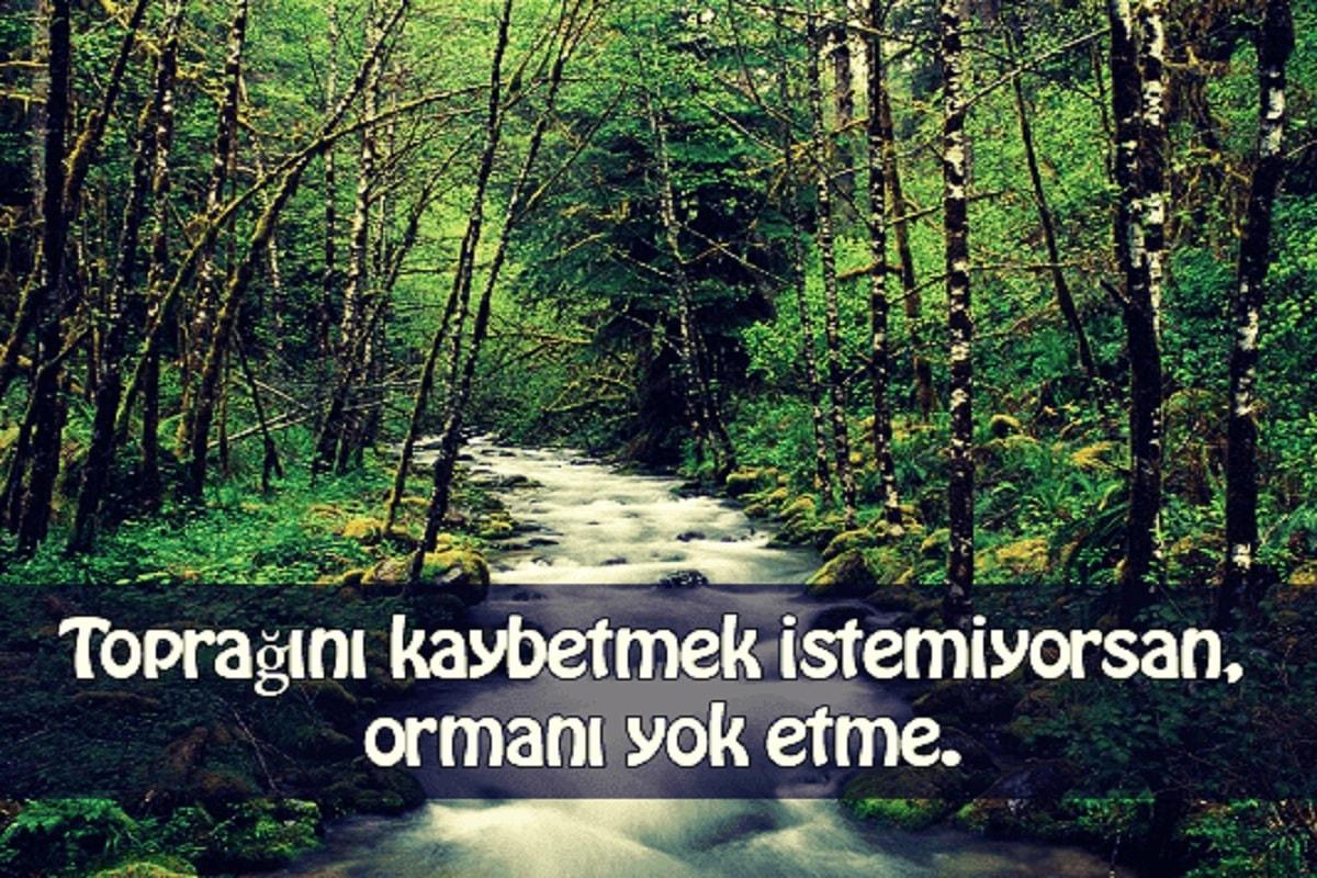 Orman İle İlgili Sözler