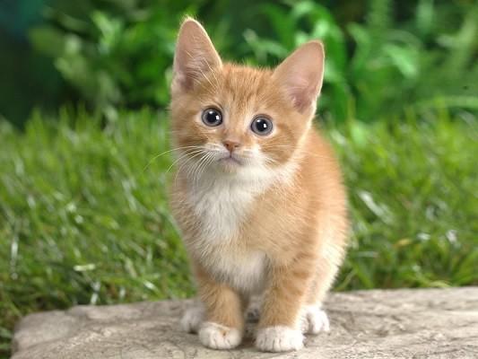 Kedilerle İlgili Sözler, Kedi Sözleri